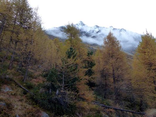 Lärchenwaldgrenze vor Dents du Veisivi