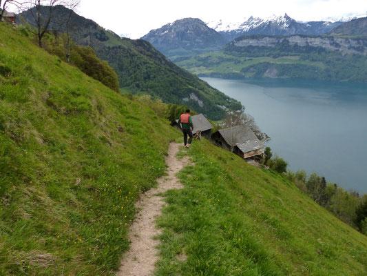 Alpe bei Nider Urmi - 877 M