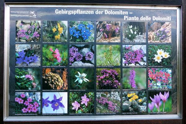 Plante delle Dolomiti