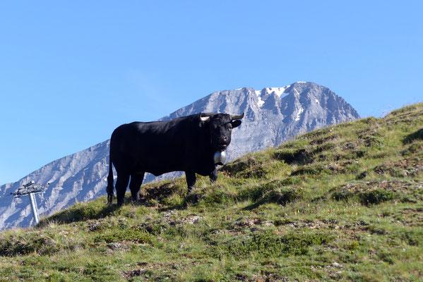 Rinderhorn, 3448 M