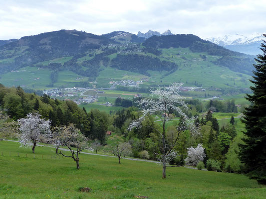 Blick zum Hochstuckli - 1566 M