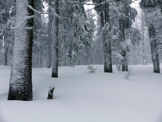 Ausgesetzte Passage im Wald