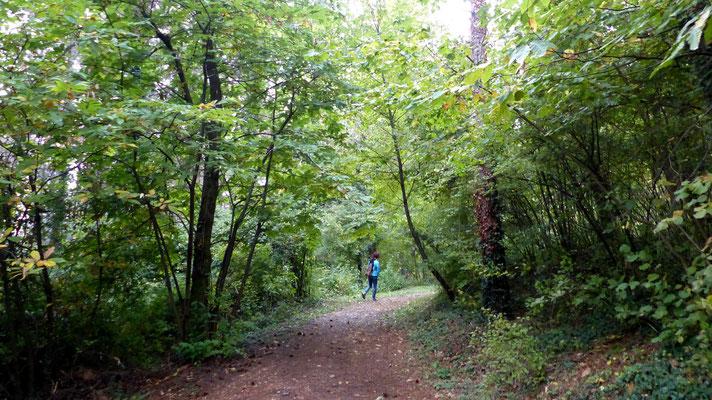 Einstieg - Sentiero Natura Pineta Sperone