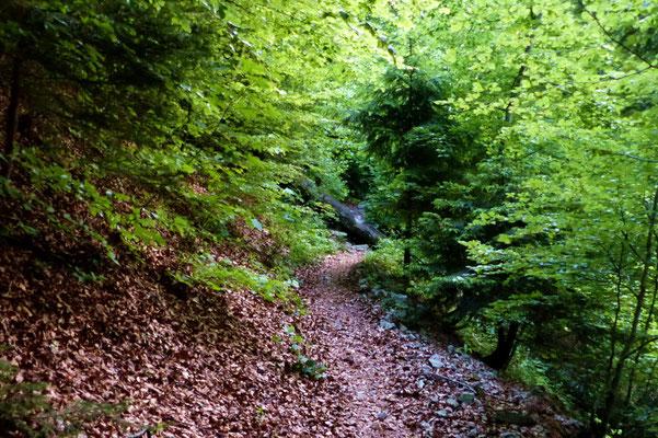 Aufstieg im Alprütiwald