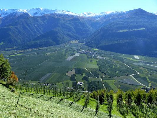 Blick gen Süd in den Vinschgau