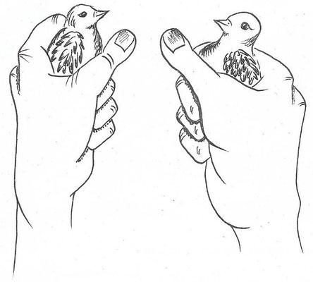feinfühlige Hände