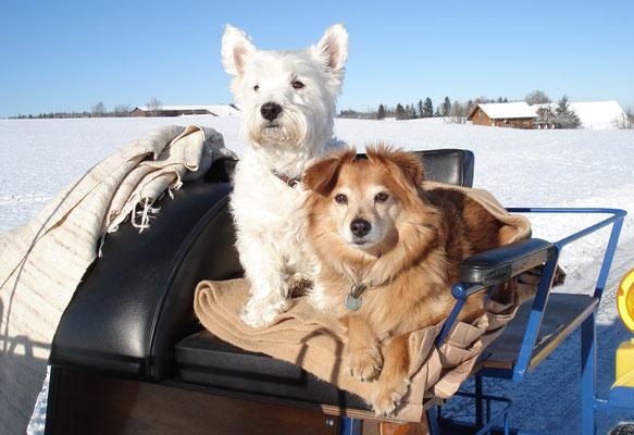 """Mit Freund """"Toby"""" auf einer Kutschenfahrt"""