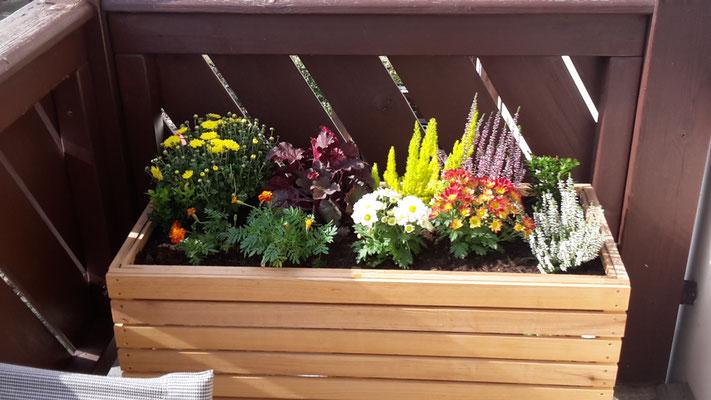 Das Balkonhochbeet im Herbstgewand