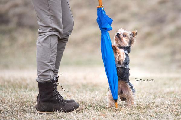 11.03.2018 - Training mit dem Schirm.