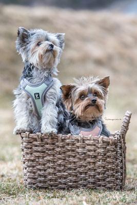 11.03.2018 - Ostern ist bald da. Lucy und Aika.