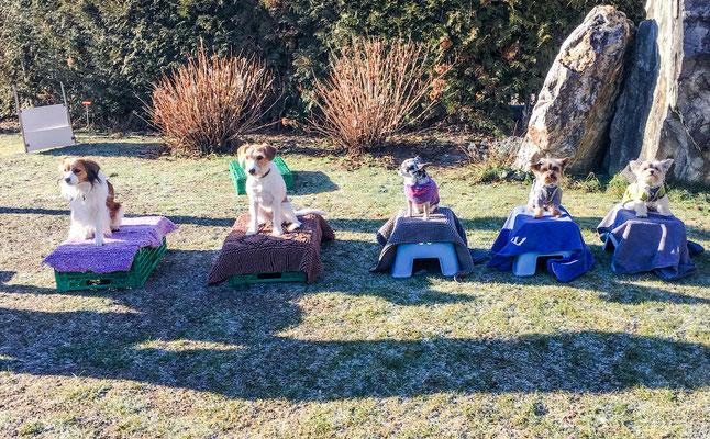 17.02.2018 Die Trickhunde warten auf ihren Einsatz. Miro, Ally, Lana, Aika, Lucy
