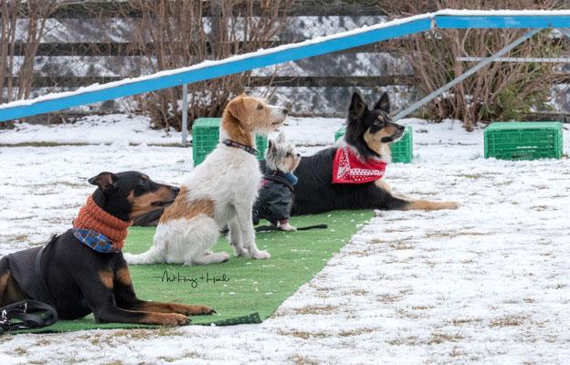 03.03.2018 - Warten. Frei ablegen mit Yana, Ally, Lucy und Luna.