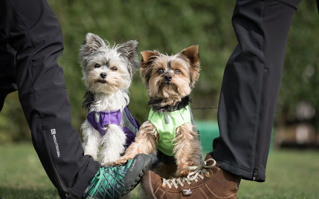 04.08.2017 Lucy und Aika das kleine DogDance Duo