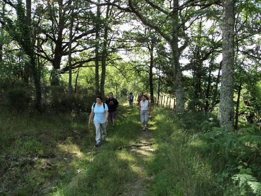 Marche dans les bois sur les chemins de St jacques Aveyron