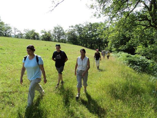 Rando dans les bois autour de Conques Aveyron