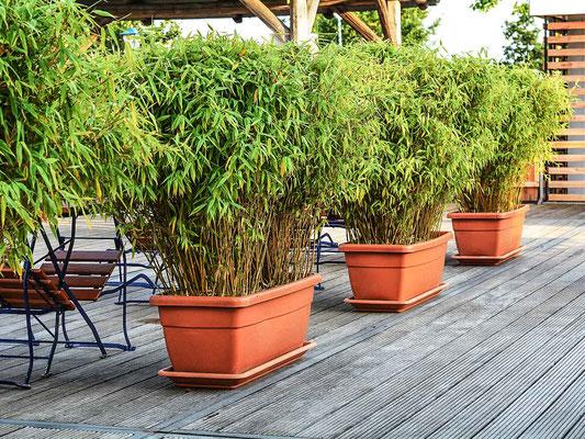 Moderne Gärten Willkommen Im Bald Schönsten Ort Der Welt In Ihrem