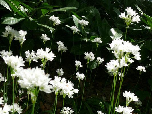 weiße Blüten in der Dunkelheit
