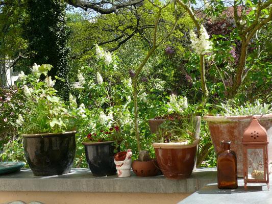 Blumentöpfe auf der Terrasse
