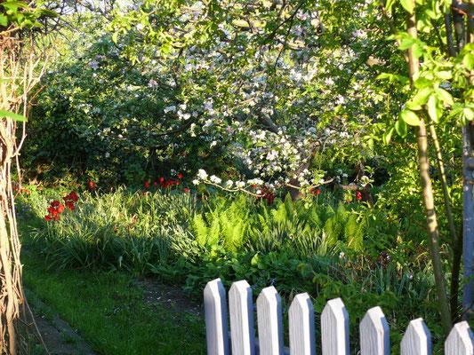 Frühling und Apfelblüte