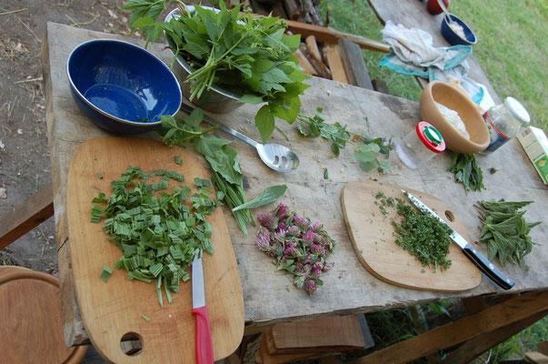 Wildpflanzen - Nahrung und Medizin