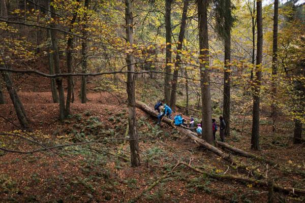 Weite Wälder -  absichtslose Zeit