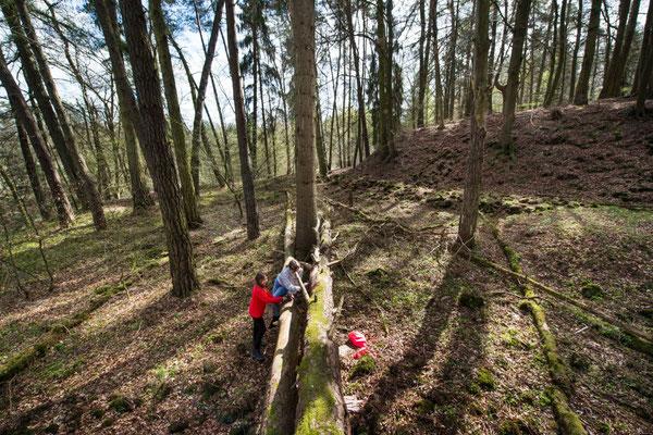einen eigenen Platz im Wald finden