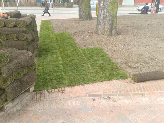 Hier ensteht mit Rollrasen im Handumdrehen eine grüne Oase inmitten der Stadt.