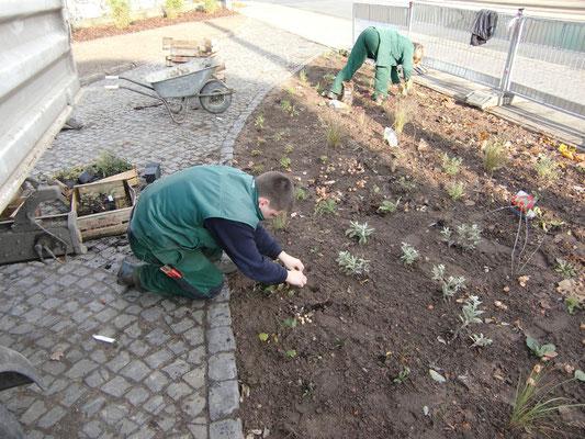 Die Pflanzung von Bodendeckern kann helfen, den Rahmen der Grünanlagenpflege in Grenzen zu halten.