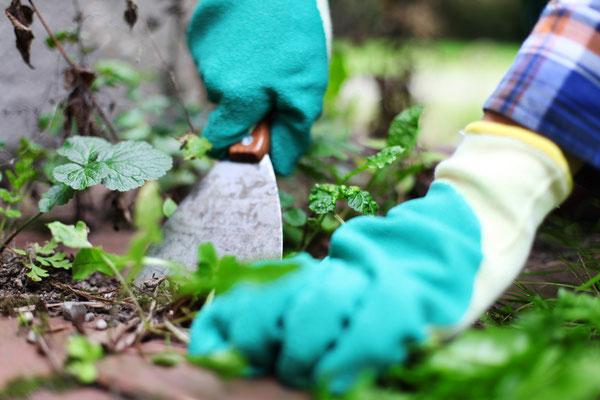 Auch Unkrautbeseitung gehört im Rahmen der Garten- und Grünanlagenpflege zu unseren Leistungen.