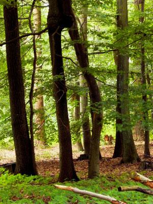 Der laufende Baum