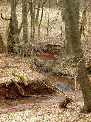 Mündung des Brandsbaches