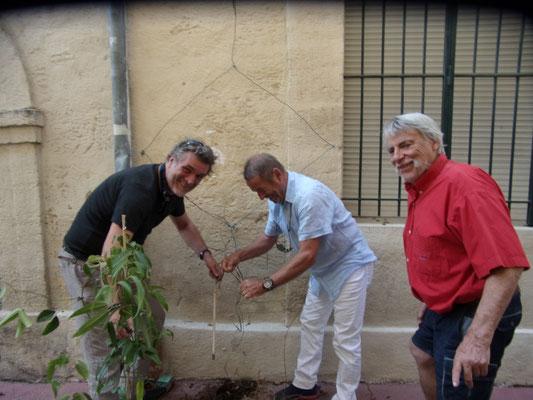 Comité de quartier st Roch-Ecusson - Micro fleurissement - 07 2019 - Maarten Thiels, Henri de Verbizier, Raphaël Segura