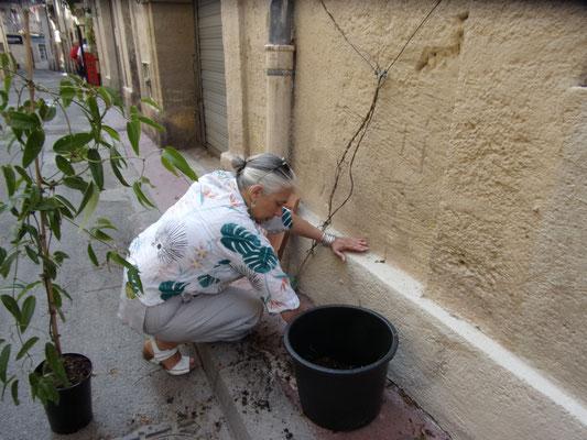 Comité de quartier st Roch-Ecusson - Micro fleurissement - 07 2019 - Mireille Alberto