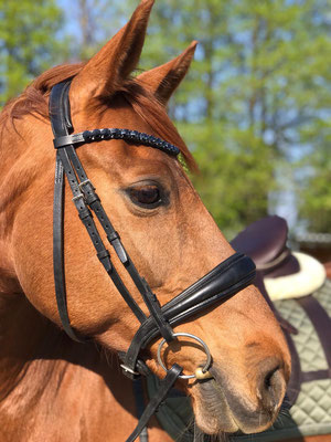 Nnachthimmel FFourteen Rivoli Stirnriemen Pferd