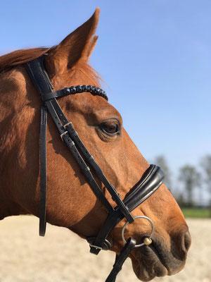 Stirnriemen Pferd