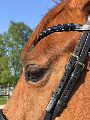 Stirnband für Pferd und Pony