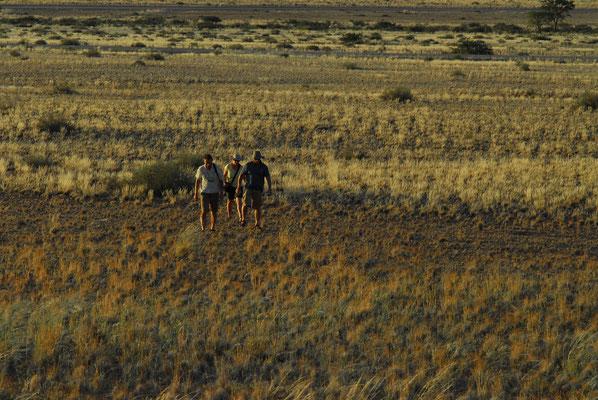 durch die grasbewachsene Wüste