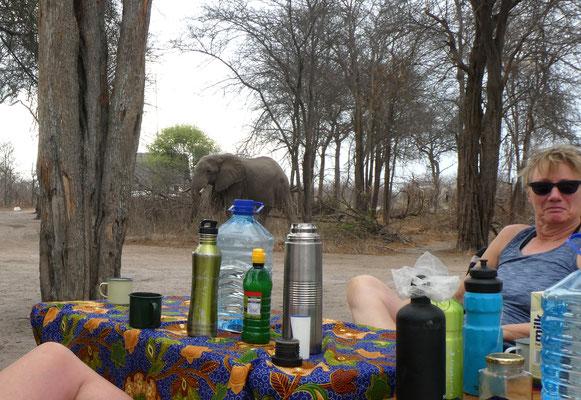Besucher zum Kaffee, Nxai Pan BOT