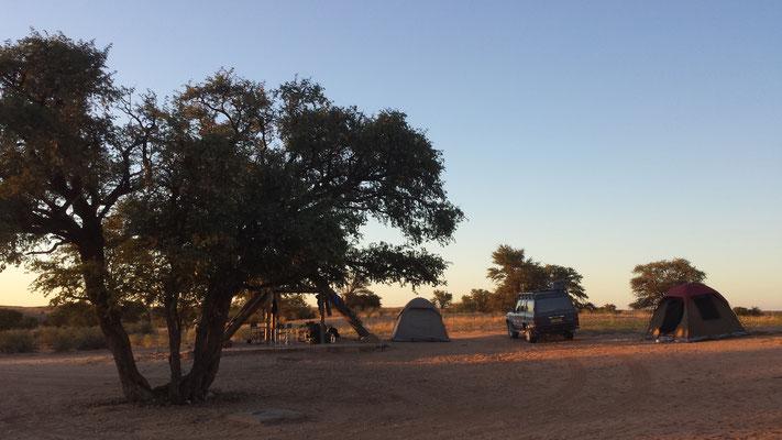 Rooiputs / Kgalagadi Tranfrontier Park, Botswana