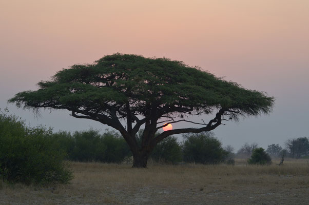 Abendstimmung im Hwange Nationalpark (ZIM)