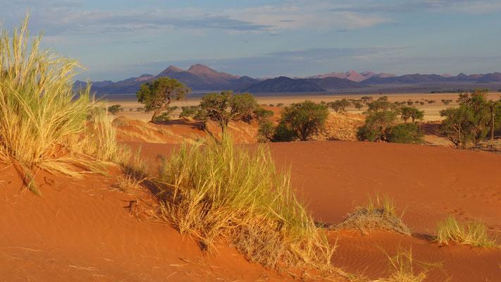 traumhafte Namib