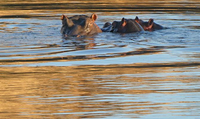 Hippo-Familie auf Düsternbrook