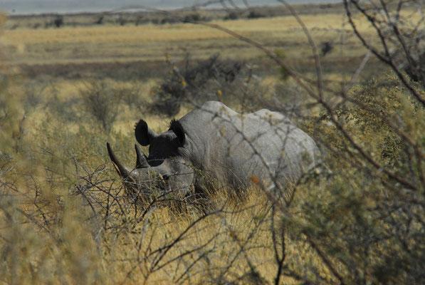 Nashornmutter in Etosha (NAM)