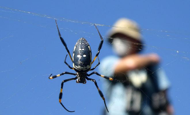 keine Angst vor klebrigen Spinnennetzen