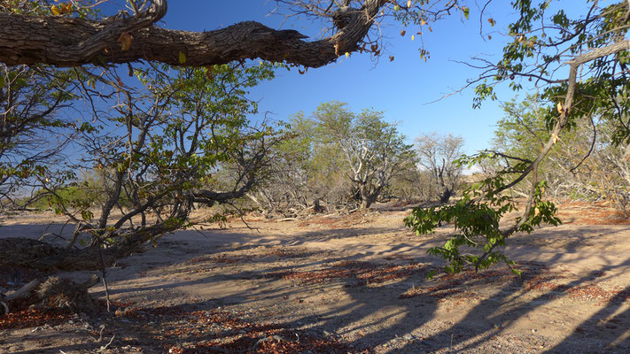 Trockenfluss bei Twyvelfontein