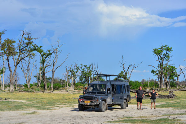 Ausflug nach Dead Tree Island, Moremi BOT