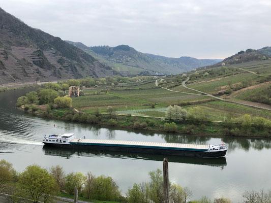 Moselschiff vor der Ruine Kloster Stuben