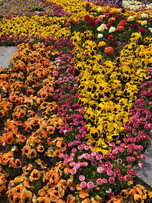 Der Frühling in seiner ganzen Farbenpracht
