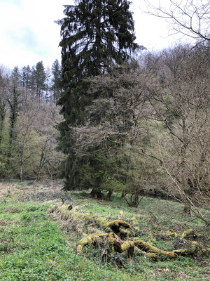 Am Fussweg zur Burg Eltz