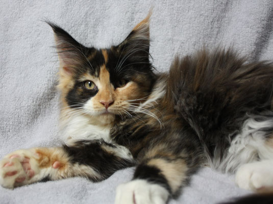 Konfetti Hopicoon Katze